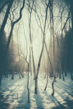 forest in the snow Winter Snow, Winter Christmas, Winter Walk, Summer Winter, Winter White, Belle Image Nature, Winter Schnee, Winter Beauty, Fauna