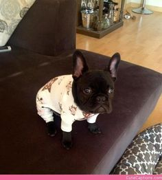 Judgey in His Jammies!