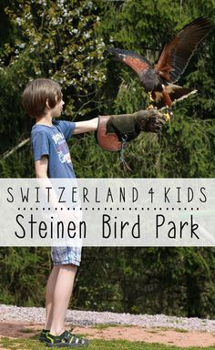 Last updated on 10 April Steinen Sudschwarzwald is a bird park, with lots of fun, interactive stuff for kids. It's exactly what you might expect – lots of birds, touristy, cheesy Alpine Coaster, Interactive Museum, Ropes Course, Zurich, Family Activities, Switzerland, Parks, Bird, Fun