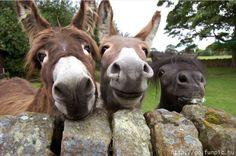 smiling mules