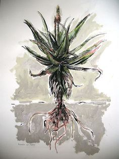 Title: Aalwyn (Aloe) Medium: Mixed Media on Paper: Chalk Pastel, Drawing Ink, Oil paint and Charcoal Size: x Watercolor Pencil Art, Pencil Painting, Artist Painting, Watercolor Paintings, Botanical Drawings, Botanical Prints, Pastel Drawing, Chalk Pastels, Whimsical Art