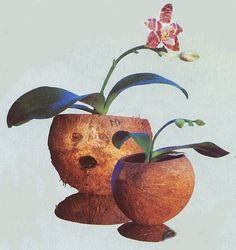 Coconut Shell Plant Pot, top to the bottom look