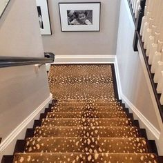 Stark Antilocarpa Stair Runner Shop The Same Carpet Under Painted Stair Risers … – carpet stairs Stairway Carpet, Carpet Stairs, Hall Carpet, Foyers, Painted Stair Risers, Staircase Runner, Staircase Ideas, Open Staircase, Spiral Staircases