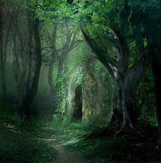 Deep green forest.