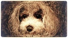 noda seizi   tsū #イラスト #トイプードル #犬 愛犬ティアモのデカ顔の原画です、この絵を変化させて行きぬいぐるみ風に、追加していきましたので、この顔が愛犬ティアモの似顔絵です、可愛いでしょう!!!  Joan Baez - let it be (live in France, 1973) http://youtu.be/TjQY_kPfwuo