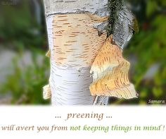 ...  #preening ... will avert you from not keeping things in #mind !