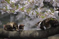 Cats on the tree in Ueno Park | Flickr - Photo Sharing!