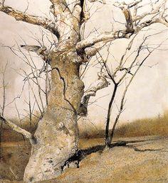 Sycamore, 1982, Andrew Wyeth