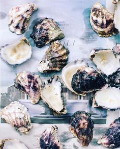 """The first man gets the oyster the second man gets the shell."" - Andrew Carnegie our kindred spirit. #CarpeDiem #EarlyBirdGetsTheWorm #GoForIt  Photo: @cntraveler  _____________  #salt #salty #ditchplains #montauk #hamptons #eats #instamood #delicious #localflavor #eatlocal #ditchplainsbeach #montauksalt #montauksaltcompany #beach #ocean #seasalt #sea #hamptons #oceantotable #sourcematters #local #buylocal #eatlocal #waves #surf #flakesalt #finishingsalt #localflavor by montauksaltcompany"