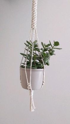 Red Succulents, Corner Plant, Small Potted Plants, Macrame Plant Hangers, Hanging Pots, Macrame Patterns, Handmade Home Decor, Plant Holders, Handmade Products