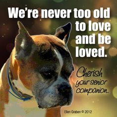 senior dogs are the best...there's a shelter especially for senior dogs for those who wants to adopt or donate. Its on the eastside... dog haven I believe... let me know if your are interested