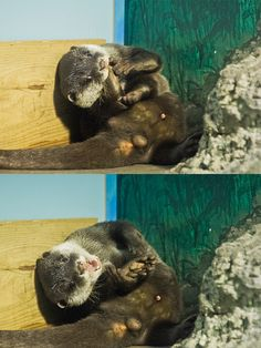 Otter pup is a little silly - June 26, 2012