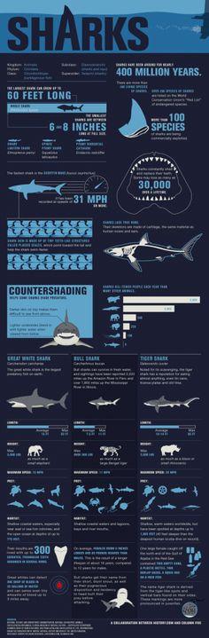 Sharks Infography