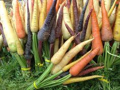 Beautiful Heirloom carrots at the San Diego farmers market.