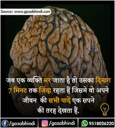Dimag: दिमाग के बारे में 35 रोचक तथ्य । Brain In Hindi - ←GazabHindi→ Some Amazing Facts, Interesting Facts About World, Unbelievable Facts, Gernal Knowledge, General Knowledge Facts, Knowledge Quotes, Wow Facts, Real Facts, True Facts