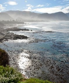 South Africa (Itinerary)