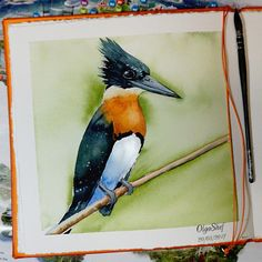 Check out this item in my Etsy shop https://www.etsy.com/listing/541698291/kingfisher-bird-watercolor-print-nature