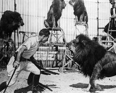 Ferdinand -  Lion Tamer [Lion Tamer Clyde Beatty. 1950.]