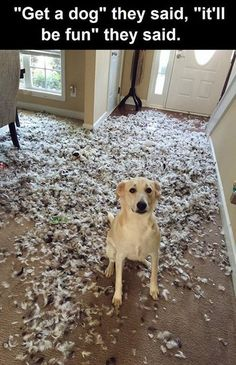 """Get A Dog"" They Said ""It'll Be Fun"" They Said cute animals dogs adorable dog puppy animal pets lol humor funny pictures funny animals funny pets funny dogs"