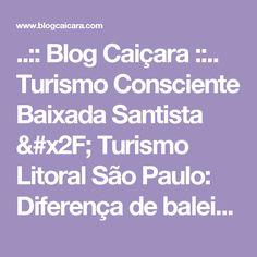 ..:: Blog Caiçara ::.. Turismo Consciente Baixada Santista / Turismo Litoral São Paulo: Diferença de baleias e golfinhos - Odontoceto ou Misticeto