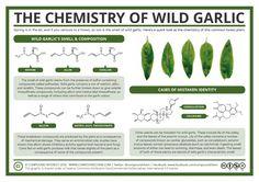 The Chemistry of Wild Garlic