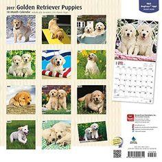 Golden Retriever Puppies 2017 Square (Multilingual Edition)