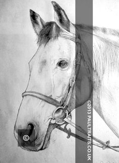 Quick A4 sketch of a pet, in this case a nice looking horse, makes a nice gift! Maybe?