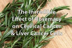 The Incredible Effect of Rosemary on  Cervical Cancer & Liver Cancer Cells