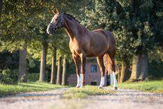 Pferdefotografie - Du möchtest ein Fotoshooting mit deinem Pferd? Alle Infos zum Pferdeshooting findest du auf meiner Homepage www.michaela-steiner.at Salzburg, Michaela, Portrait, Horses, Photography, Animals, Bayern, Photoshoot, Photograph