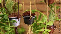 Mini jardín con cápsulas de café Dolce Gusto - Reciclado, reciclaje, upcycling 7