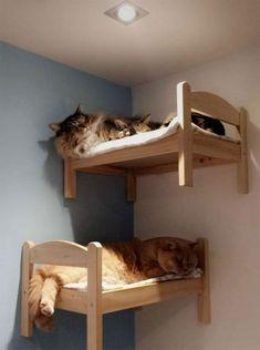 120 Ideas De Cat En 2021 Casita Para Gatos Muebles Para Gato Cosas Para Gatos