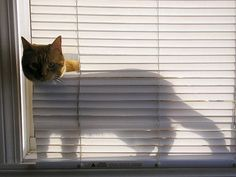 Oh hi....your new blinds appear to have come without the window I requested. Don't worry, I fixed it.