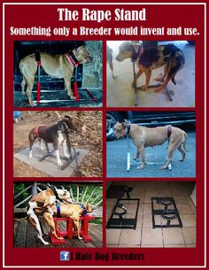 There is no end to the way people can abuse dogs. STOP THIS