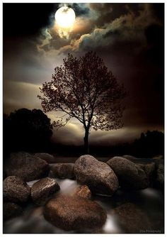 Lone Tree In The Moonlight by Ellis Photography