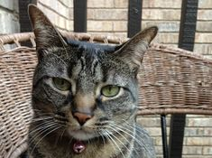 Why Is This Cat Aggressive Around House Guests?