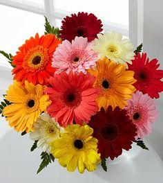 My most favorite flower.  Gerber Daisies.