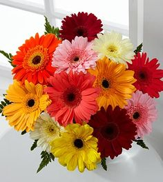 gerber daisy for table centerpiece