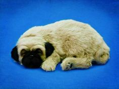 Perfect Petzzz Pug Puppy Pet that Actually Breathe w/ Battery, Handcrafted in 100% Synthetic Materials, w/ Own Bed, Collar, etc by Perfect Petzzz. $41.99. Perfect Petzzz Pug. Perfect Petzzz offers the ideal alternative to pet ownership. Say goodbye to feedings and vet bills. Say hello to lots of love and cuddles. Each pet comes with its own bed, collar, adoption certificate, and carrier. With one 'D' Alkaline battery, the pet will breathe for 3 - 4 months. With two D Alkaline bat...