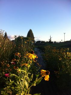 Sunrise! Good morning lovely flowers :)