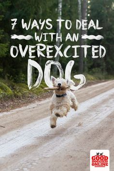 Top 7 Ways to Deal With an Overexcited Dog How to Deal with an Over excited Dog. Is your dog hyper? Check out these dog training and obedience tips on how to deal with an energetic dog. Excited Dog, Dog Minding, Easiest Dogs To Train, Dog Care Tips, Pet Care, Dog Hacks, Dog Barking, Dog Training Tips, Potty Training