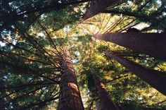 magical trees 18 Theres something magical about trees (28 photos)