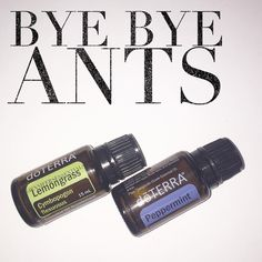 Suns out ☀️ and so are the ANTS ! . Finding ants in your home is not something anyone looks forward to. Once I found out that I had an invasion! . It's critical to stop it right away. This solution is totally natural and non-toxic , no need for poison !  . In a 2 ounce glass spray bottle: 10 drops peppermint & 10 drops lemongrass , topped off with water. Shake well and spray on the ant trail, window sills and doorways. . Say Goodbye to these pesky lil guys  ....