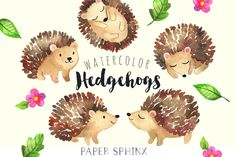 Sweet Hedgehog Watercolor Pack by PaperSphinx on @creativemarket