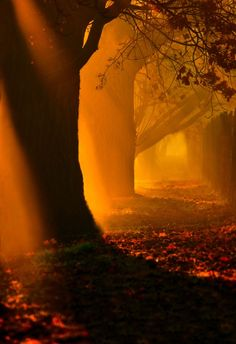 Mystical Forest, Hungary Forests, Orang, Morning Light, Tree, Amber, Soft Autumn, Sunset, Sunris, Path