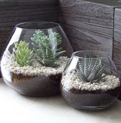 Fishbowl garden Great way to keep cactus and succulents