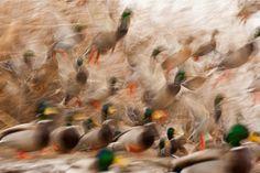 Máté Bence: Récelárma Color Art, Nature, Animals, Naturaleza, Animales, Animaux, Animal, Animais, Nature Illustration