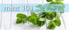 All About Mint—health benefits, growing info, uses and recipes