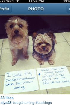 My own dogs shaming - Sounds like something my two would do!