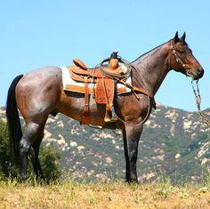 Bay Roan roping horse I love roans! All The Pretty Horses, Beautiful Horses, Animals Beautiful, Western Riding, Horse Riding, Horse Photos, Horse Pictures, American Quarter Horse, Quarter Horses