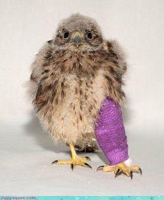 broken leg. awe!